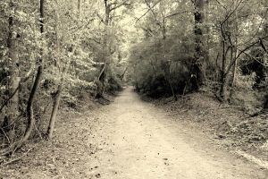The trail traveled most. by AlexReedWhite