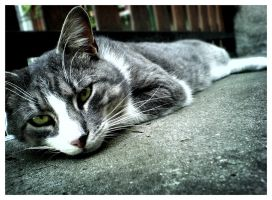 my cat by milanioom