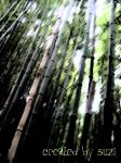 Bamboo by wickedmaidenover