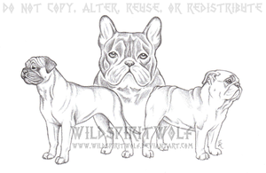 Three Dog Breed Shaded Sketch by WildSpiritWolf