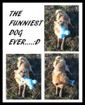 THe funniest dog ever.. by What-is-worth