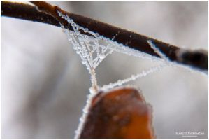 Frozen 018 by MarcoFiorentini