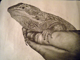 A2 Obs 1 - Bearded Dragon by Melody-Chaos