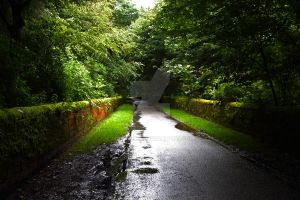 Summers Walk after a shower by RickyRees