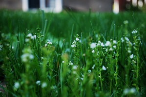 laying in the grass by elmiry