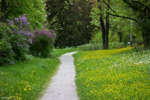 park trail in spring by blacky-mo