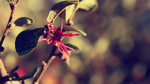 The Strings Of Wind by atLevel1Alt