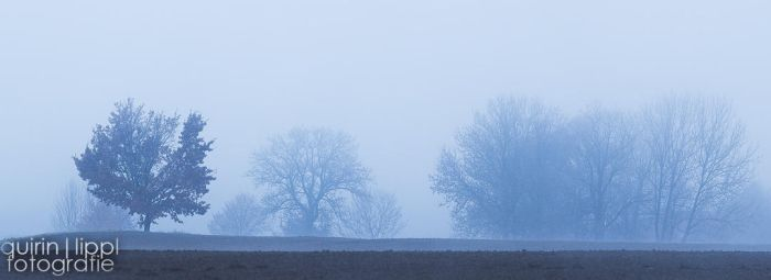 Foggy silhouettes by quintz