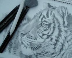 Head of a tiger (in the works) by LovingDrawings
