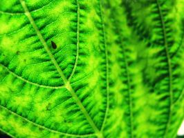Green by Nick-Marschlich