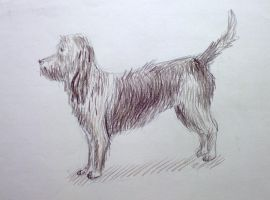 Dog. Sketch. by Cunami-in-october