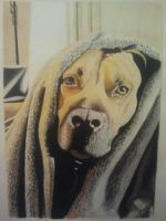 Roscoe by cuspartist77