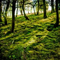 Moss by Dave-Ellis