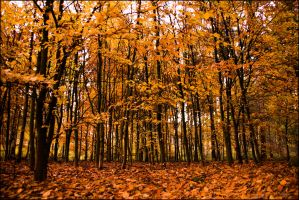 Autumn Forrest by db-photoblogDOTcom
