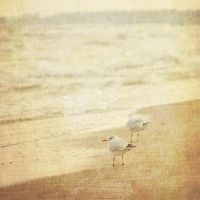 Seagulls II by Justysiak