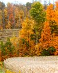 Shades of Autumn 2014.IX by MadGardens