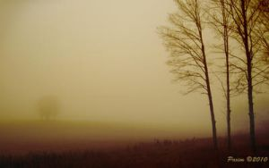 Leafless Brume by Paxim