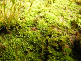 Shining moss by TomorrowPhotographer