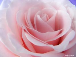 Rose 167 by Deb-e-ann
