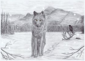 Lone Wolf by PhilipHarvey