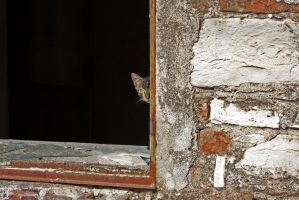 The Cat in the deserted House by cachealalumiere