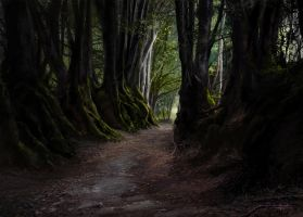 The Way From the Forest by tonyhurst
