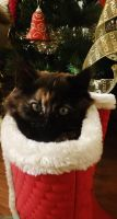 Kitty in santas boots by IamNasher