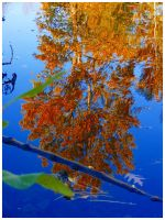 Reflections of Fall by SLJones-photo