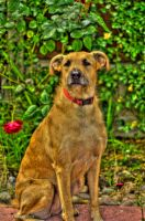Hollie the Cartoon Dog HDR by Red-Smurfette