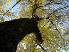 Nature_ tree 02 by Aimelle-Stock