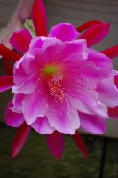 Pink Flower by MLeighS