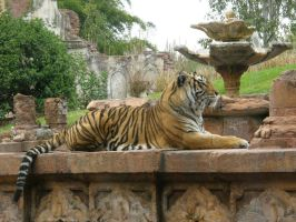 Tiger 4 by D-is-for-Duck