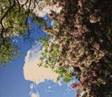 blue sky and blossom by awjay
