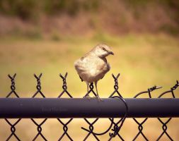 On the Fence by DaisyDinkle