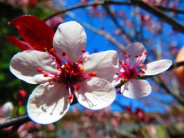 Macro Blossoms by Michies-Photographyy
