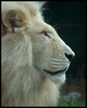 his Majesty by morho