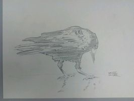 quuick sketch crow by Symyn240