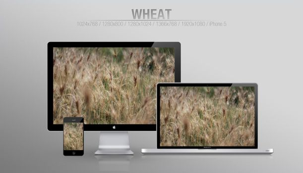 Wheat [WALLPAPER] by Snoddy