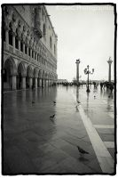 Pigeons of San Marco by GMCPhotographics