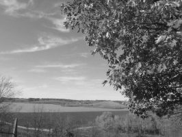 black and white Autumn View by joyful-melody