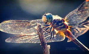 Dragonfly 2 by Karl-B