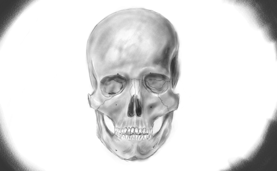Frontal Skull by herabec