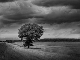 I stand alone... by carlzon
