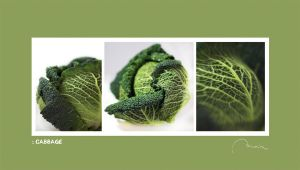 :: cabbage by moiraproject