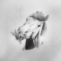 Benji - traditional drawing by Pencil--Pony