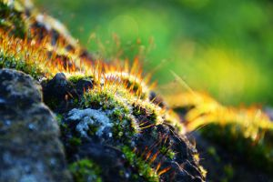 Autumn Moss by Fabi-FR