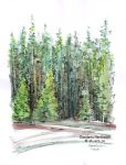 Sketchbook - Fir trees by dh6art