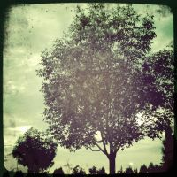 The Trees by rebel9890