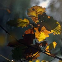 Feuilles feuilles feuilles by positively
