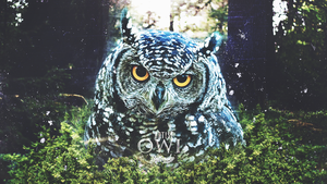 OWL - Single cover art by mattovsky